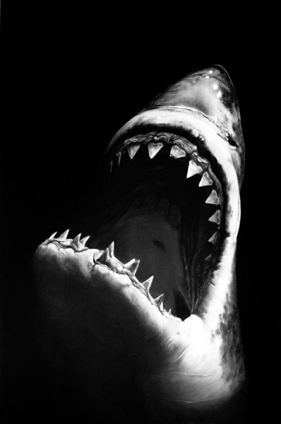 robert longo - shark