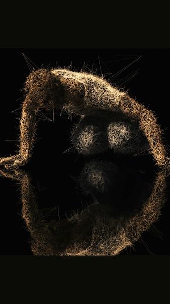 Pascal Haudressy, Narcissus, 2010 - dijital
