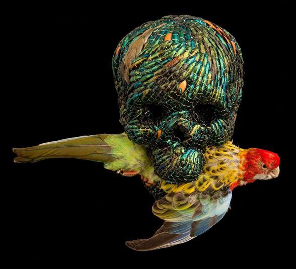 Jan Fabre, Skull, 2010 - bok böceği kanatları, polimer, dondurulmuş hayvan - 28x23x19 cm
